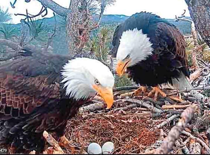 Big Bear Eagles